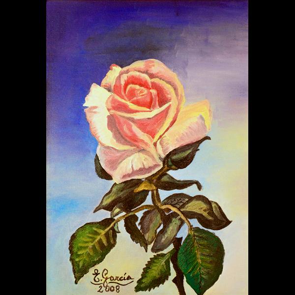 1-rosa-rosae