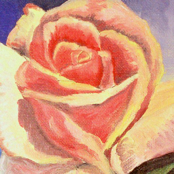 1-rosa-rosae1