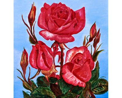 Rosas magenta